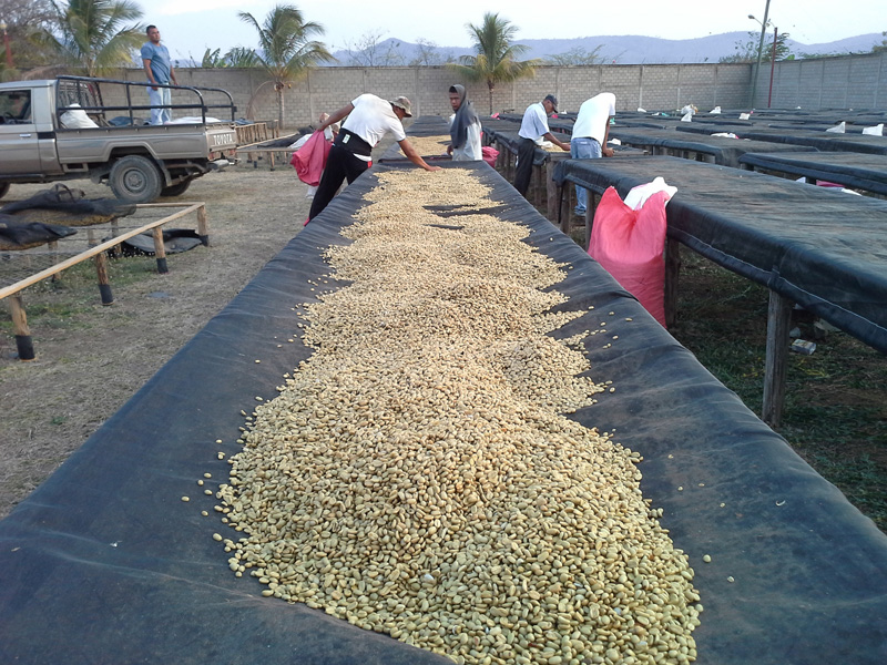 Kaffee Parchment