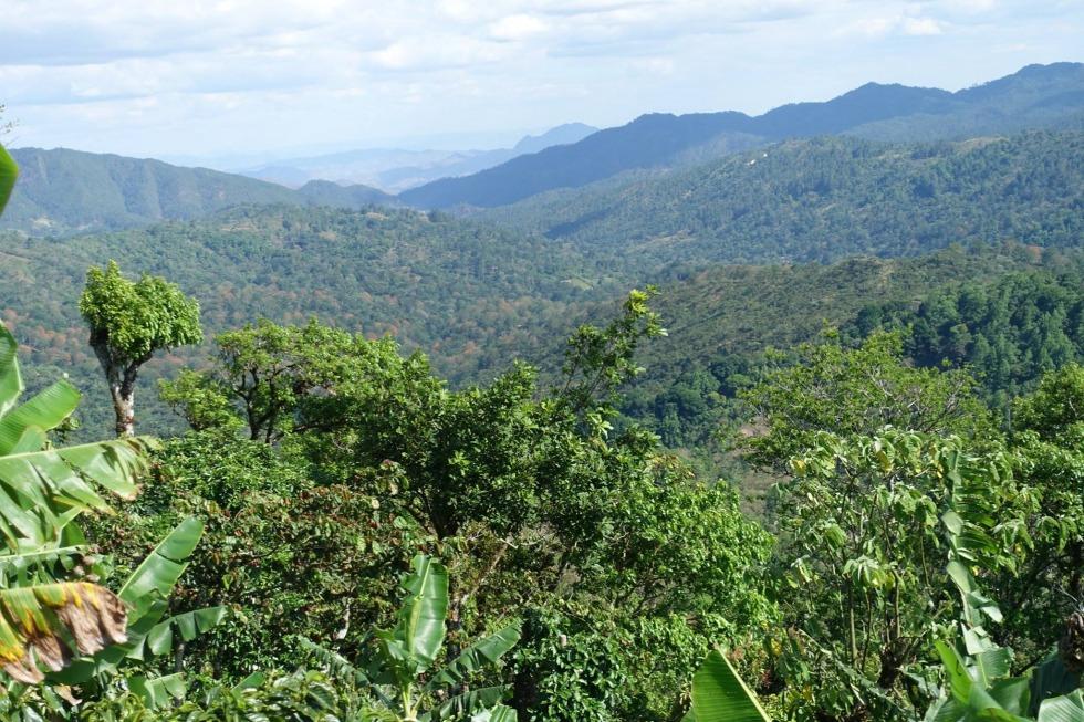 Kaffeereise El Salvador / Nicaragua