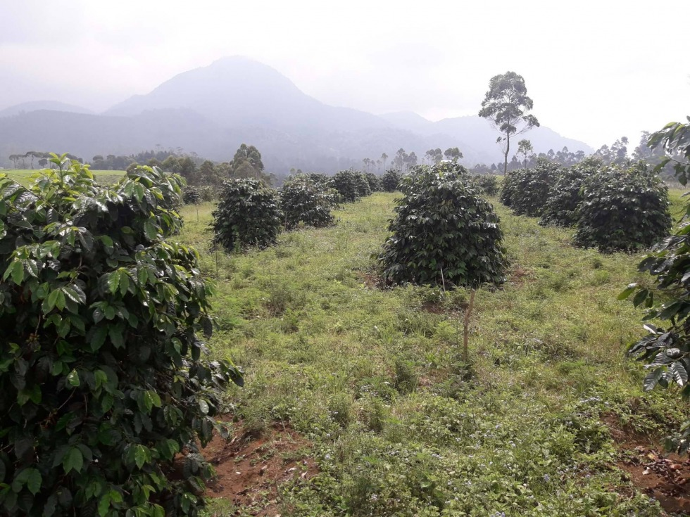 Kaffeereise Indonesien